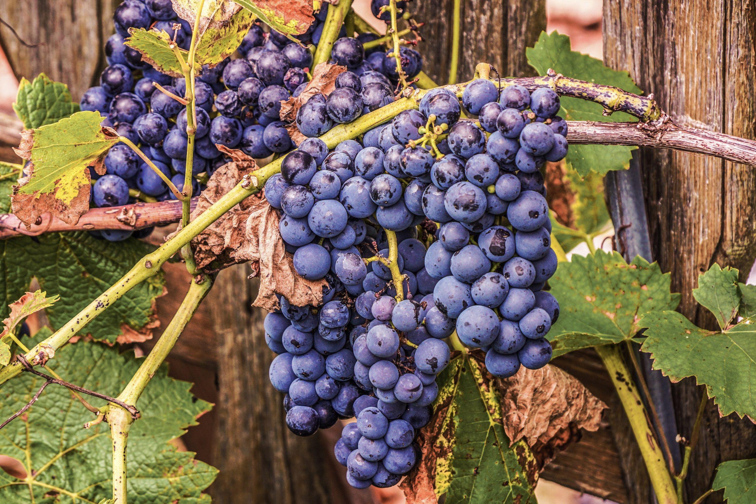 AK Weinbau – Thema: Reform des Deutschen Weingesetzes